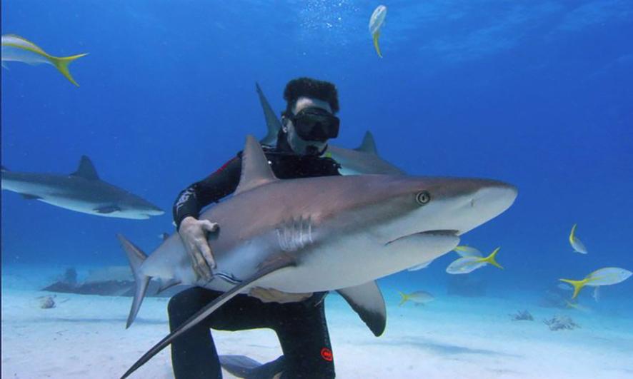 Index - Tudomány - A cápák színvakok